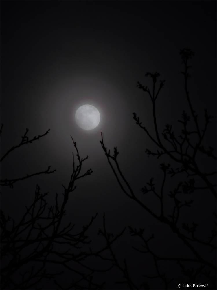 Creepy Moon
